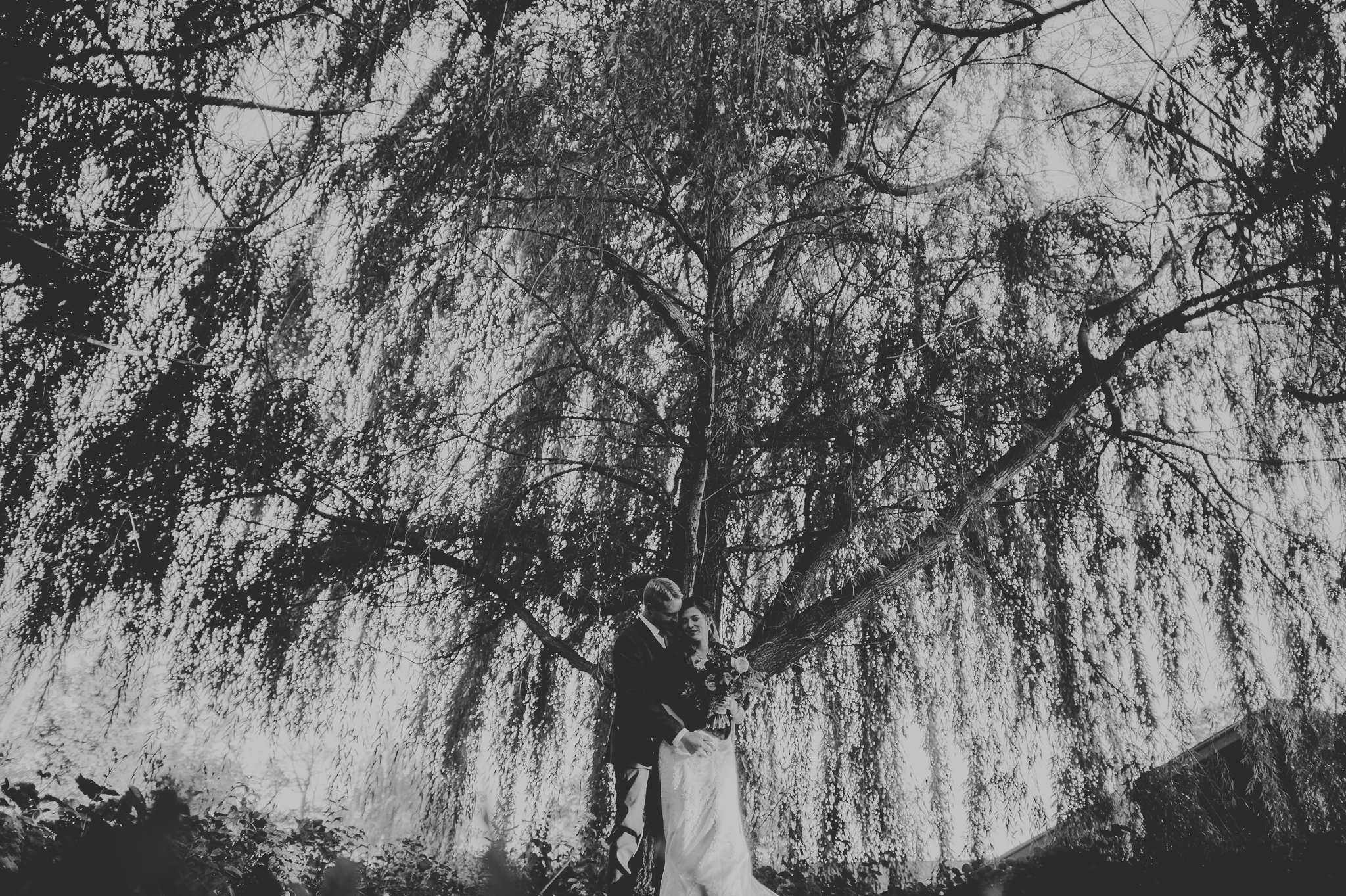 08 amazing tree at stouts island - Mandy + Mike // Amazing Wedding at Stout's Island Wisconsin Preview